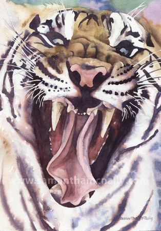 Samantha McNally, Big Cat Rescue Tiger, 3rd Prize San Leandro Library 2013