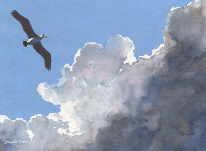 Samantha McNally, Pelican in the Clouds